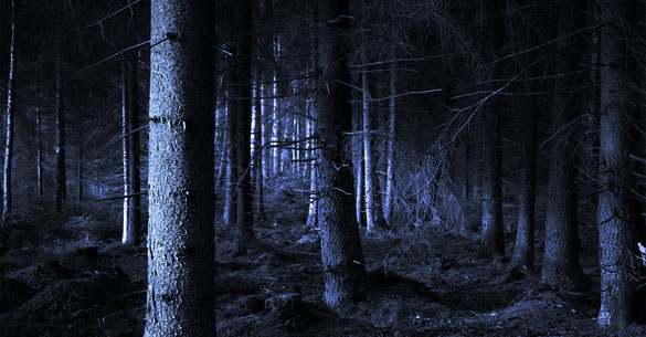Egyedül az erdőben / Önvallomás a félelemről